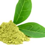 green tea extract in powder form