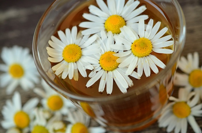 chamomile oil moisturizes the skin