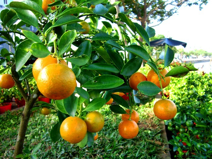 mandarin oil is one of the best essential oils for eczema
