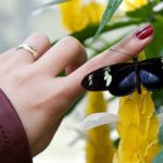 a woman's hand with her finger on a butterfly