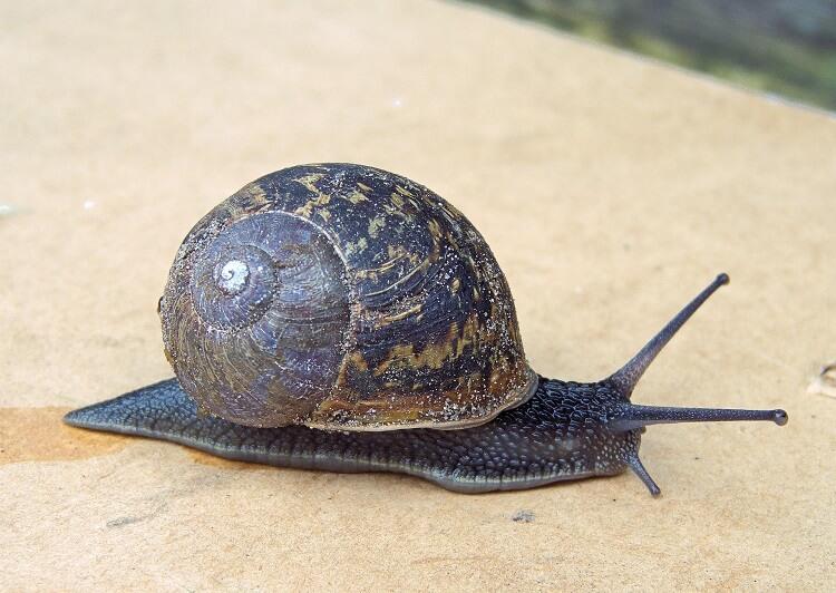 an image of a closeup snail