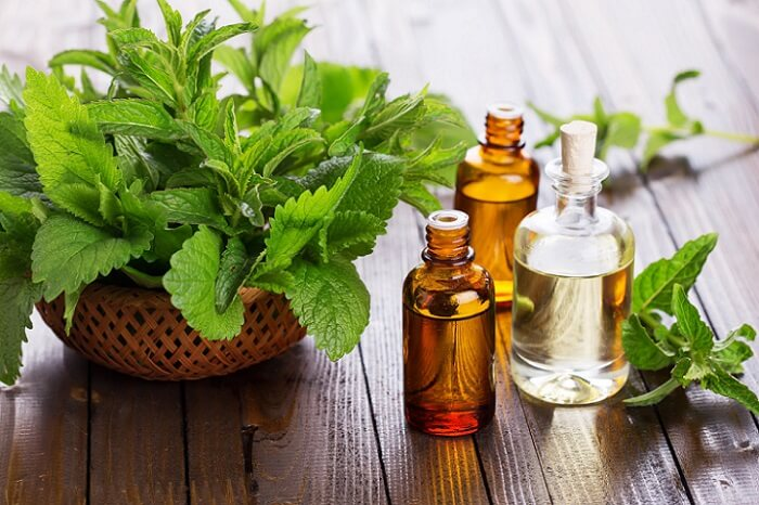 clove leaves and clove oil