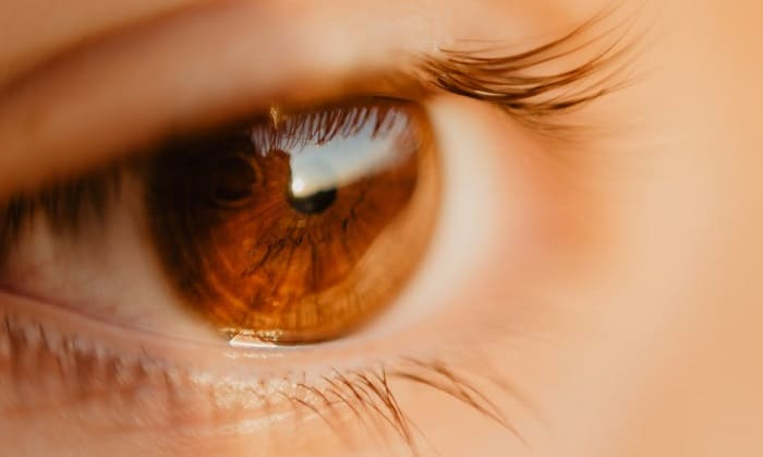 close up of a brown eye