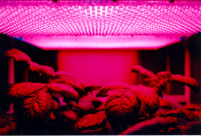red light therapy - red light room